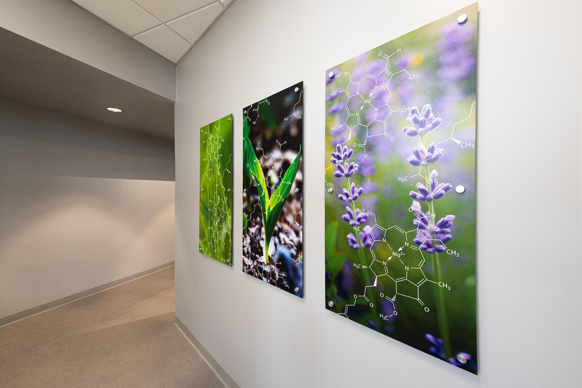Large Moxie panels at LSUS