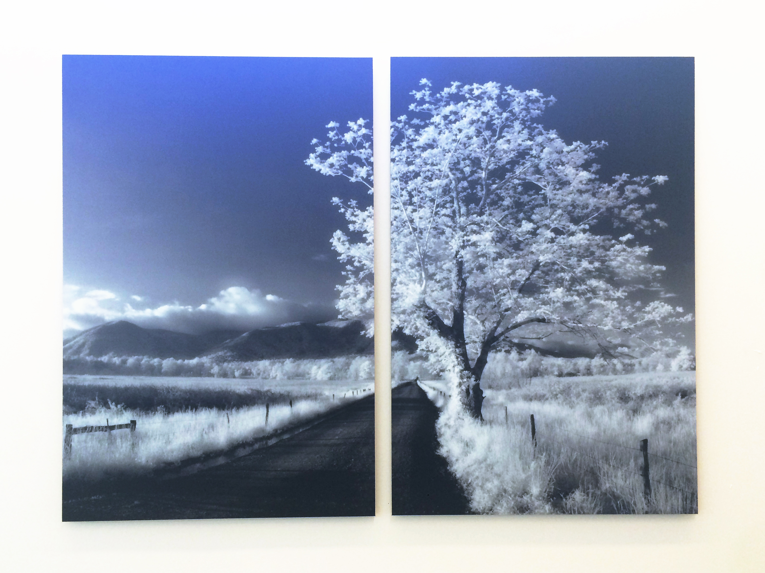 Photo of a snowy tree image on Moxie panels in hospital waiting area