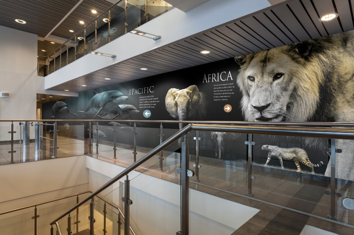 Museum Wallcovering